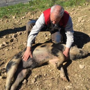 Objectif zéro déchets avec les cochons noirs de Lenthéric